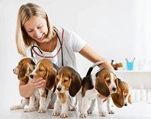 莆田宠物医院宠物诊疗