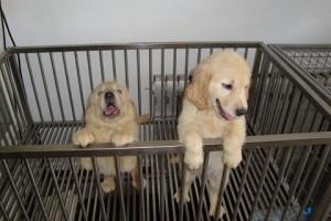 莆田宠物医院,宠物寄养