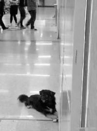 小黑守在急诊室门外