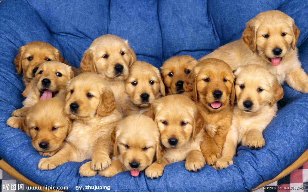 宠物狗从小认识生活用品
