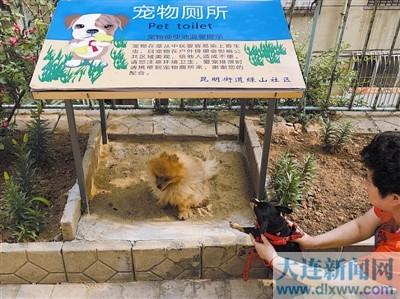 """""""宠物厕所"""":让宠物狗在固定地点排泄-莆田要不要也来一个"""