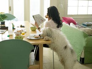 狗狗吃了不该吃的东西怎么办?