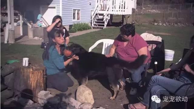 男孩和狗狗因车祸跌落山谷,没想到狗狗为护主不惜和野狼大战3天