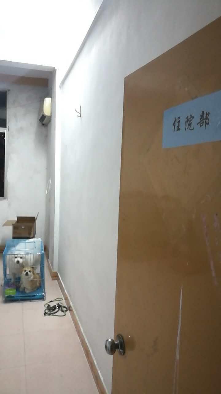 莆田宠物医院六城门宠物诊所重新装修过,更好的服务你的宠物!